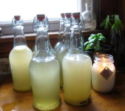 Several bottles of light yellow colored brewed Sima sit on a sunny windowsill