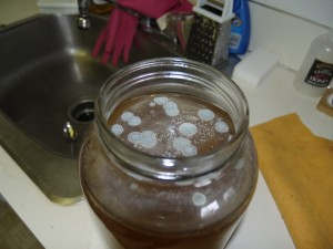 More than a dozen blue, quarter-sized circles of Kombucha mold sit on top of a ruined brew.