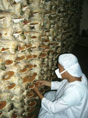a wall of mushrooms