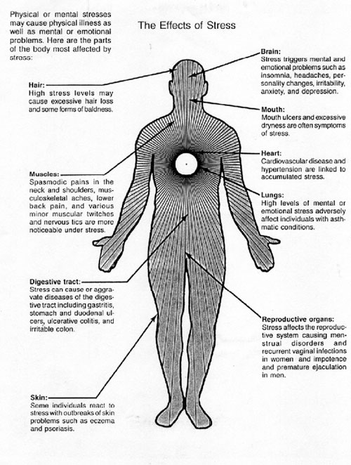 A detailed diagram shows the detrimental effects of Stress on the Body