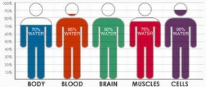 human body of water chart