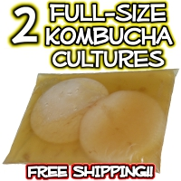 2 Full Size Kombucha SCOBY Cultures from KKamp
