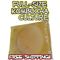 Full Size Kombucha SCOBY Culture from KKamp