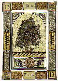 this tarot card shows the the elder tree