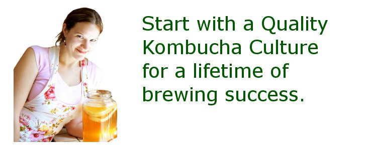 Start with a quality Kombucha culture for a lifetime of brewing success.