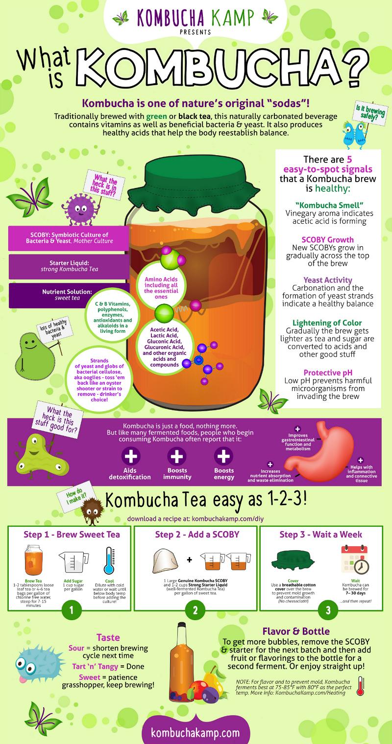Diy Kombucha Infographic