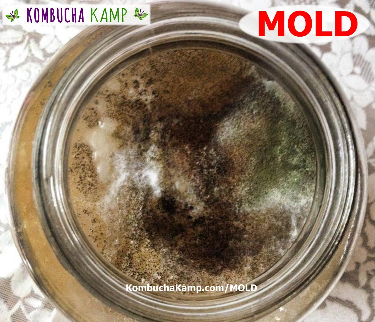 How to identify black mold - How To Identify Black Mold 55