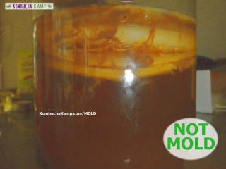 Reddish Brown yeast smears against the side of the glass vessel from between layers of Kombucha SCOBY but No Kombucha Mold