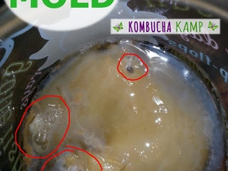 New young Kombucha SCOBY forms in white areas around the original Culture and 3 areas of yeast and bubbles have trapped in the formation, but it's NOT Kombucha Mold