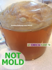 A side view of a new Kombucha SCOBY forming with some dry brown areas in the center but No Kombucha Mold and it does have some nice bubbles