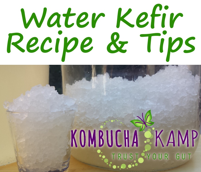 Water Kefir Recipe for fresh Water Kefir Grains from Kombucha Kamp