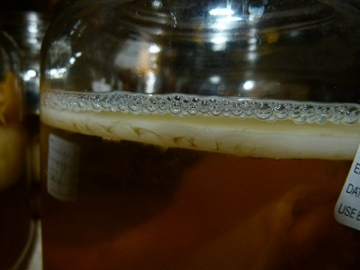 a Kombuchs SCOBY forms on top of the brew as bubbles collect