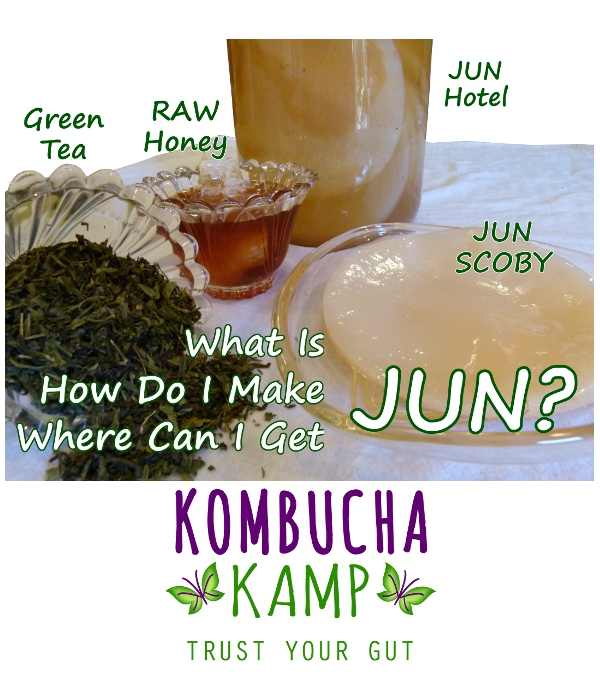 What is JUN Tea How do I make Where can I get JUN Cultures