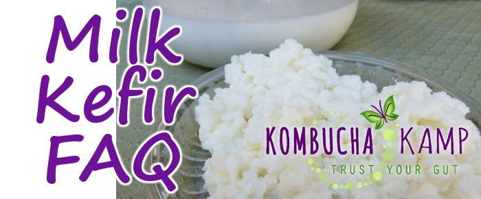 Milk Kefir FAQ from Kombucha Kamp