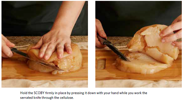 Slicing a SCOBY horizontally like bread with a serrated knife is one way to Trim SCOBYs