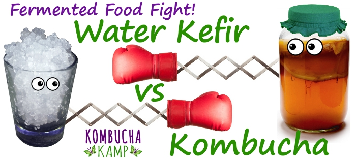 Water Kefir vs Kombucha Tea Which is Better?