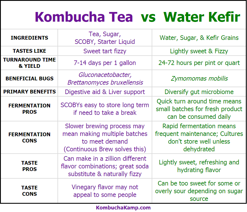 Water Kefir vs Kombucha Which is Better Chart for Comparison