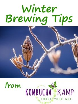 Winter Brewing Tips for Kombucha, JUN, Water Kefir and Milk Kefir from KKamp