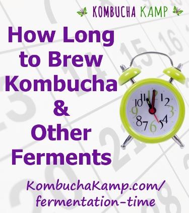 How Long To Brew Kombucha Fermentation Time Kombucha Kamp